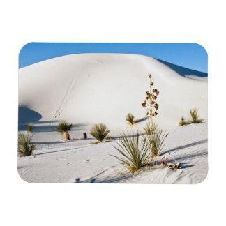 Transverse Dunes and Soaptree Yucca 2 Rectangular Photo Magnet