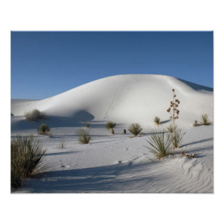 Transverse Dunes and Soaptree Yucca Poster