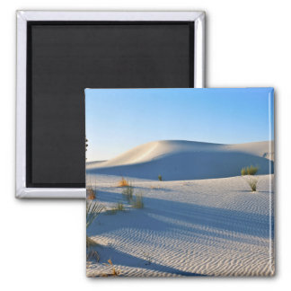 Transverse Dunes, Yucca, Early Morning Light 2 Inch Square Magnet