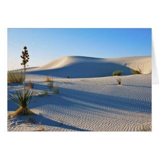 Transverse Dunes, Yucca, Early Morning Light Card