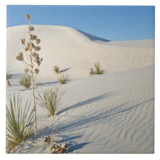 Transverse Dunes, Yucca, shadows Ceramic Tile