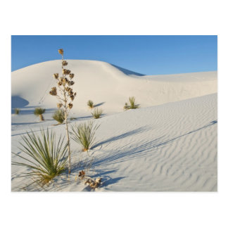 Transverse Dunes, Yucca, shadows Postcard