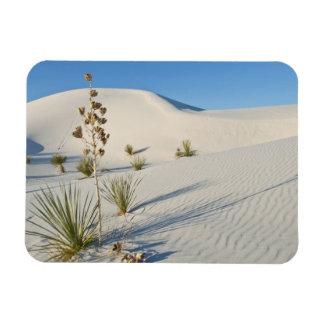 Transverse Dunes, Yucca, shadows Rectangular Photo Magnet