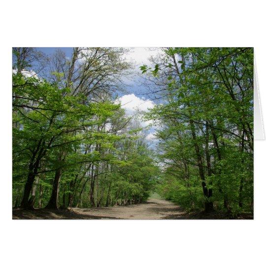 Transylvanian Forest Card