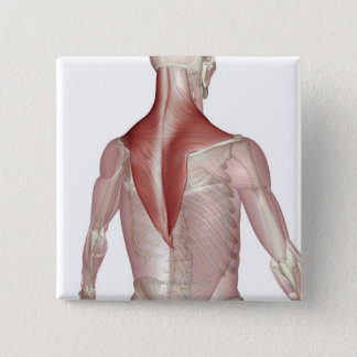 Trapezius Button