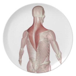Trapezius Melamine Plate