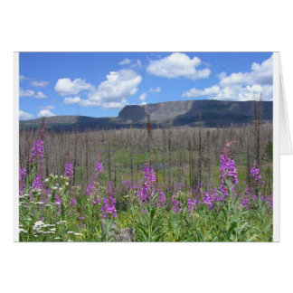 Trapper's Lake Fireweed Flowers Card