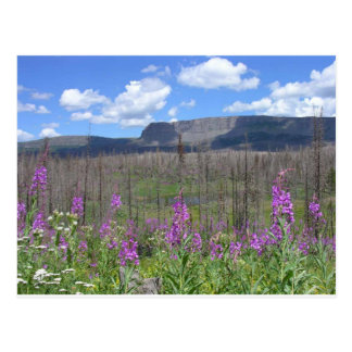 Trapper's Lake Fireweed Flowers Postcard