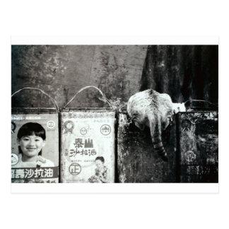 Trash and cat postcard