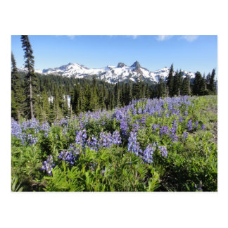 Travel Mt. Reinier Washington Postcard