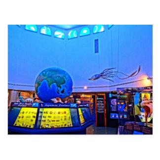 Travel Photography Sanibel Island Florida Shells Postcard