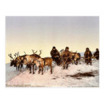 Traveling by reindeer, Archangel, Russia classic P Postcards