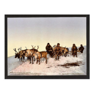 Traveling by reindeer, Archangel, Russia classic P Postcard