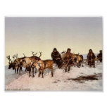 Traveling by reindeer, Archangel, Russia classic P Poster