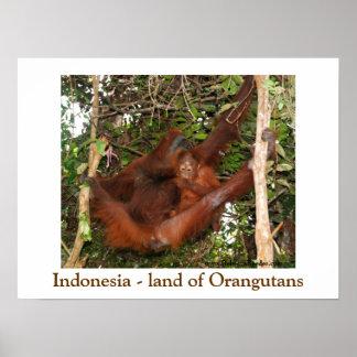 Traveling the Land of Orangutans Print