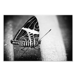travesía de la mariposa cojinete