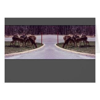 Travesía de los ciervos - tarjeta