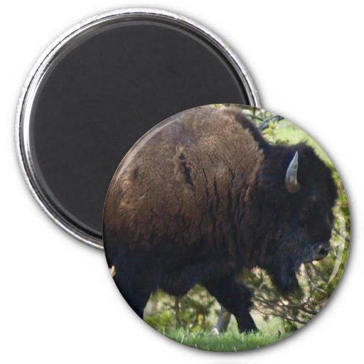 Travesía del bisonte imán redondo 5 cm