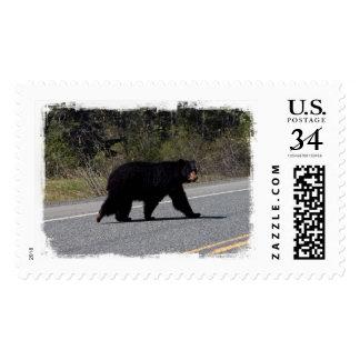 Travesía del oso de BLCR Envio