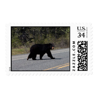Travesía del oso de BLCR Franqueo
