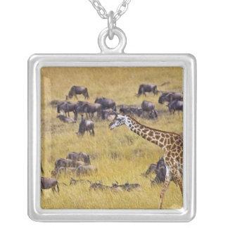 Travesía del río de Mara por las jirafas y Collar Plateado