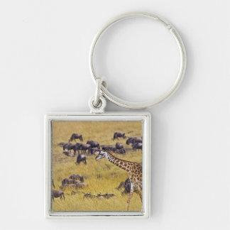 Travesía del río de Mara por las jirafas y Llavero Cuadrado Plateado