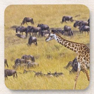 Travesía del río de Mara por las jirafas y Posavasos De Bebida