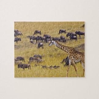 Travesía del río de Mara por las jirafas y Puzzle