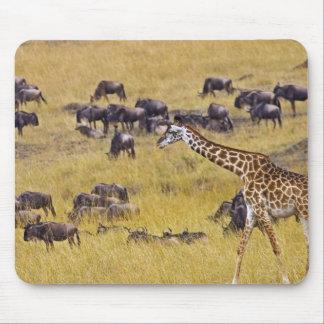 Travesía del río de Mara por las jirafas y Tapete De Ratón