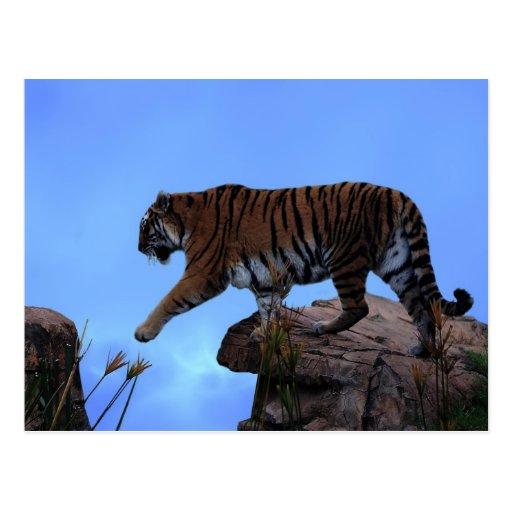 Travesía del tigre postal