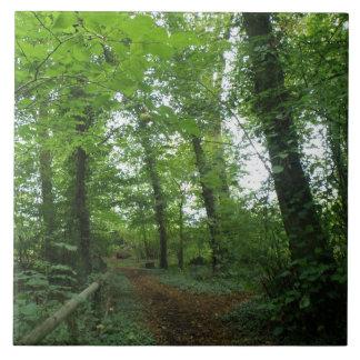 Trayectoria a través de la teja verde del bosque