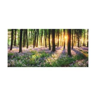Trayectoria a través de las maderas del bluebell impresión en lienzo