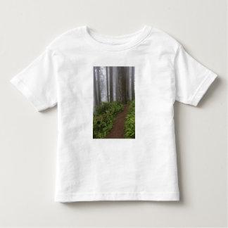 Trayectoria a través de los árboles gigantes de la playera de bebé