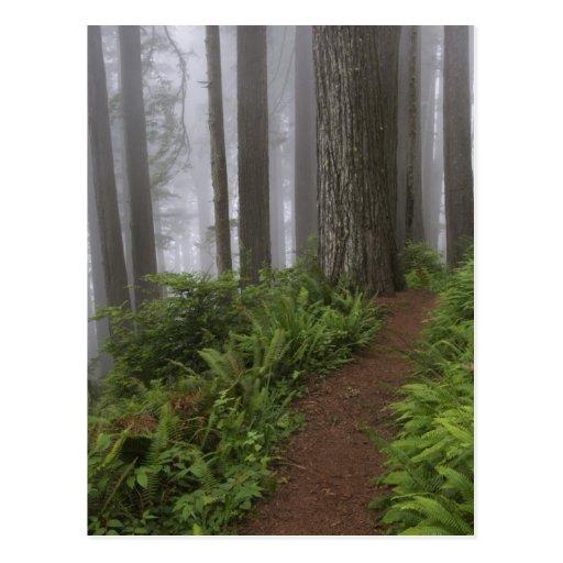 Trayectoria a través de los árboles gigantes de la tarjeta postal