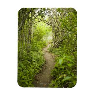 Trayectoria a través del bosque imanes flexibles