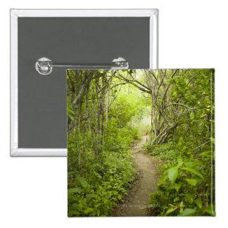 Trayectoria a través del bosque pin