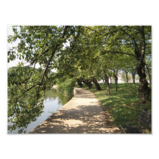 Trayectoria alineada árbol por la orilla del lago impresión fotográfica