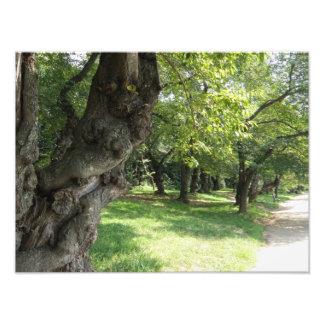 Trayectoria alineada árbol por la orilla del lago cojinete