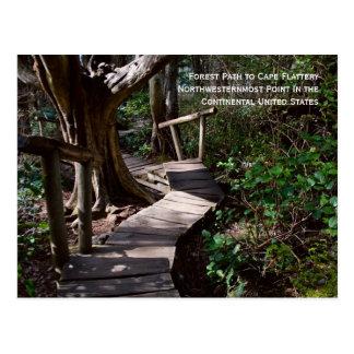Trayectoria de bosque a la adulación del cabo tarjetas postales