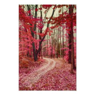Trayectoria de bosque etérea con colores rojos de  impresiones fotográficas