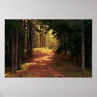 Trayectoria de bosque Sunlit Poster