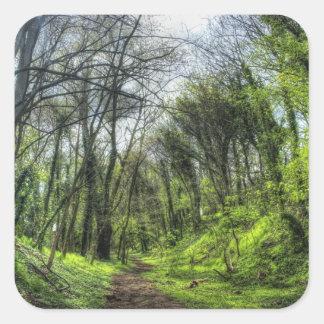 Trayectoria de bosque verde HDR Calcomanías Cuadradas