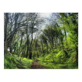 Trayectoria de bosque verde HDR Postales