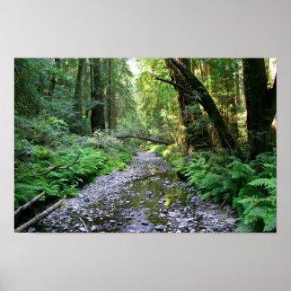 """""""Trayectoria de helechos"""", maderas de Muir Impresiones"""