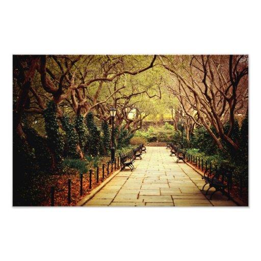 Trayectoria de la primavera del Central Park - New Impresion Fotografica