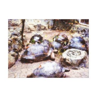 Trayectoria de la tortuga lona estirada galerias