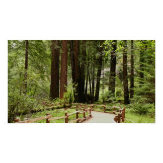 Trayectoria de maderas de Muir que imprimo Posters
