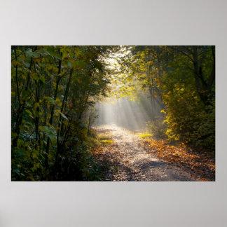 Trayectoria del arbolado del otoño con Sunrays Póster