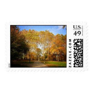 Trayectoria del otoño, Central Park, New York City Envio