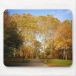 Trayectoria del otoño, Central Park, New York City Alfombrillas De Ratones